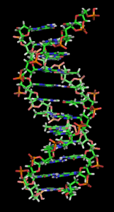 Modern DNA representation (Source: Wikipedia)